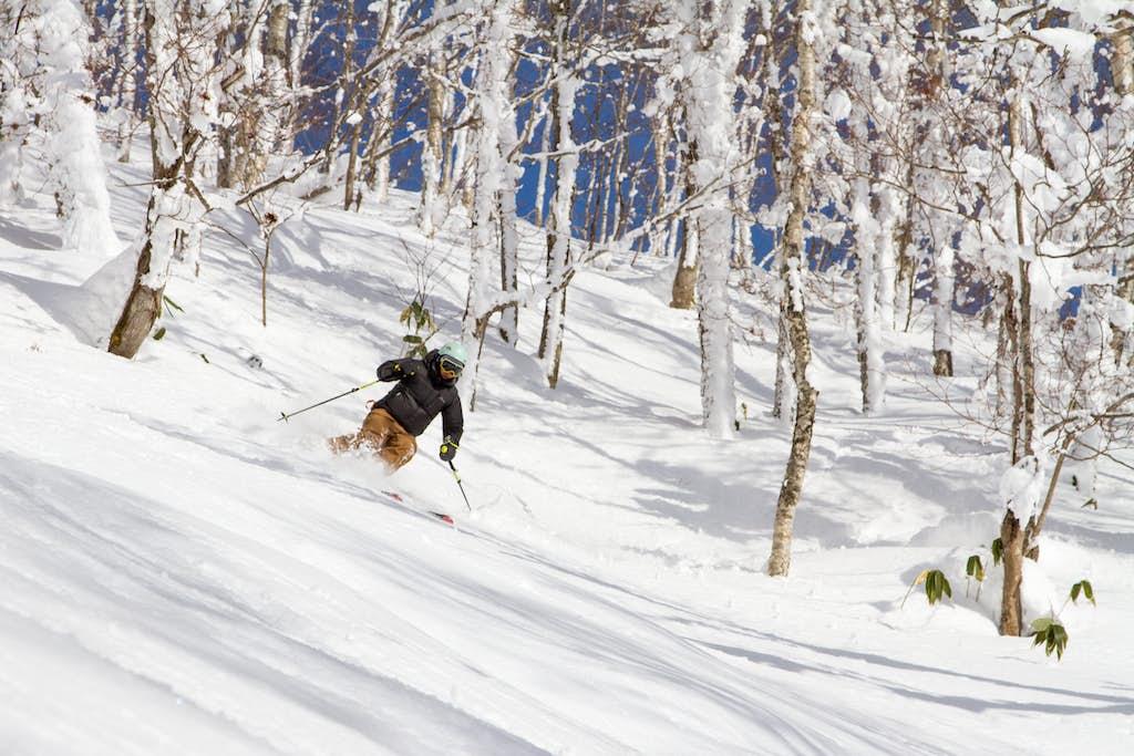 Japan skipakke skiferie tree skiing
