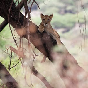 rundrejse_i_østafrika_lake_manyara_nationalpark