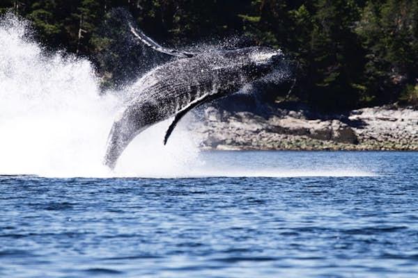 canada hvalsafari