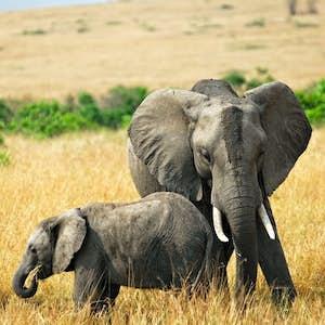rejser i november safari