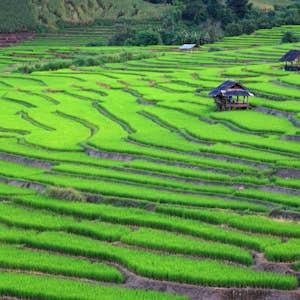 rejser i november thailand