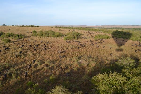 Ballonsafari masai mara Kenya