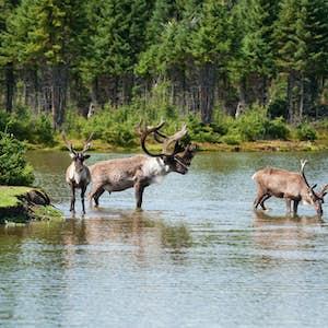 toronto, elge, nationalparker