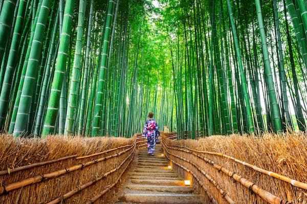 Kyoto. Arashiyama. Bambusskov.