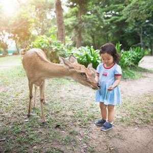 Nara dyreparken, Japan med børn